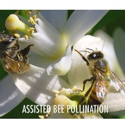 assited bee pollination